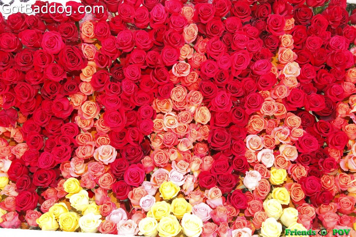 NYE_Rose_Bowl_5005