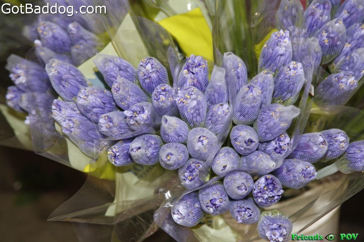 flowers-on-6951