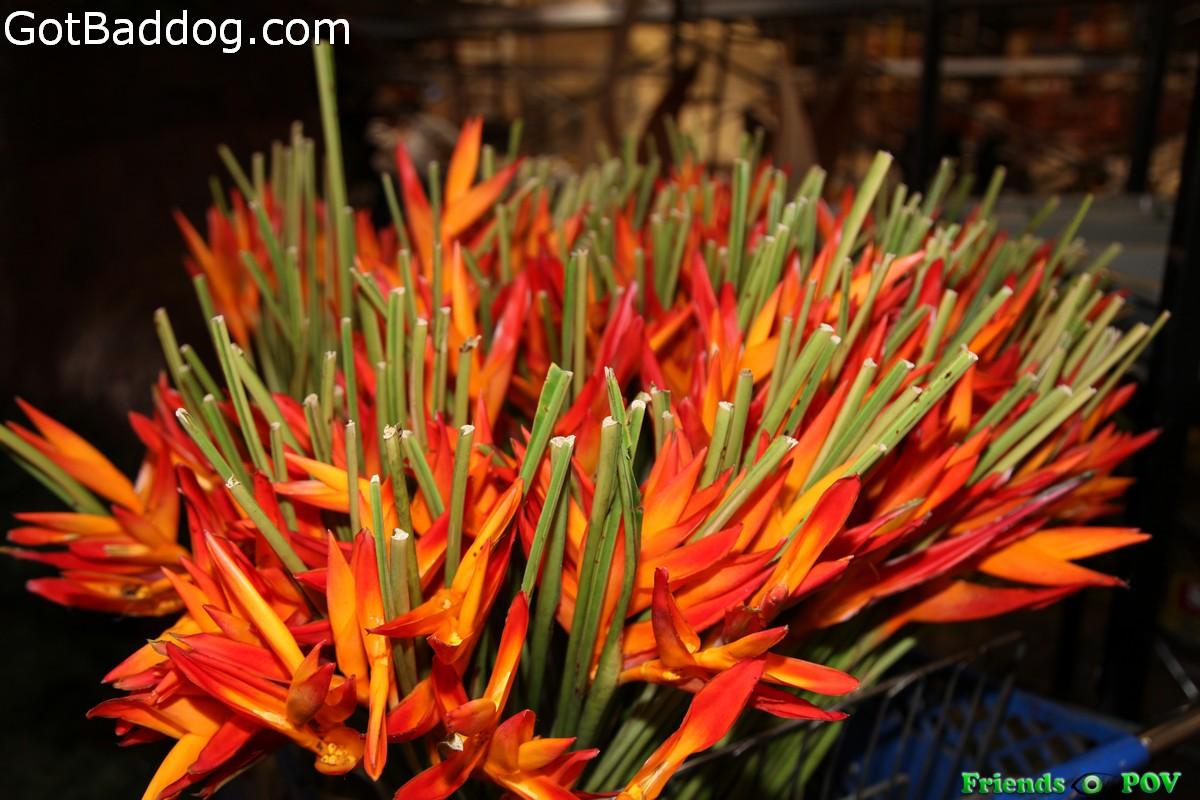 flowers-on-7069