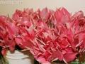 flowers-on-6950