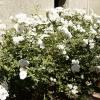 gardens_1327