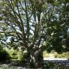 gardens_1353