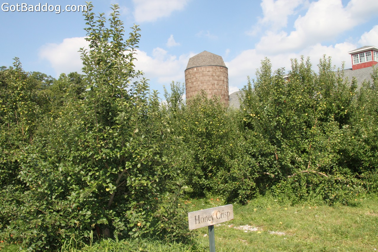 countyorchard_0439
