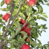 countyorchard_0436