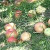 countyorchard_0440