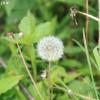 cumberlandloop_6544