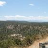 gilaforest_5092