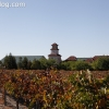 vineyards_3471