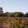 vineyards_3485