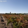 vineyards_3495