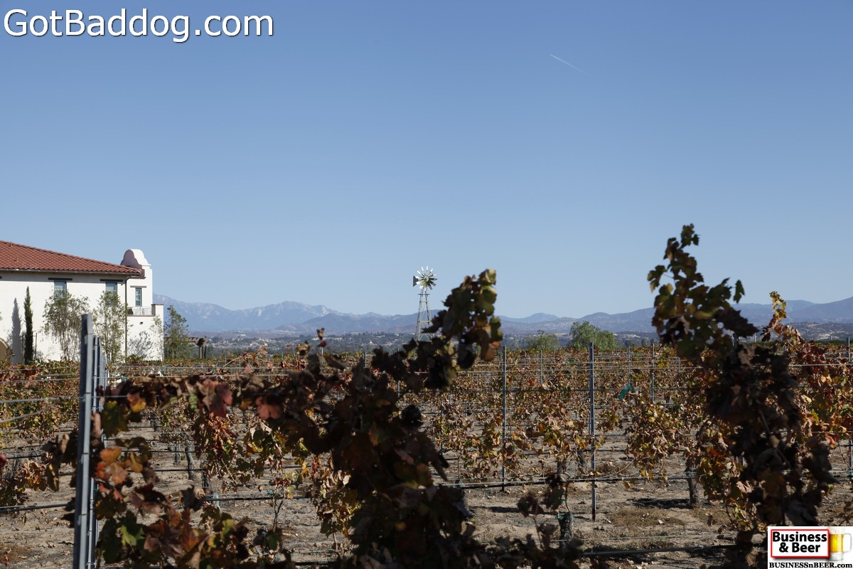 vineyards_3469