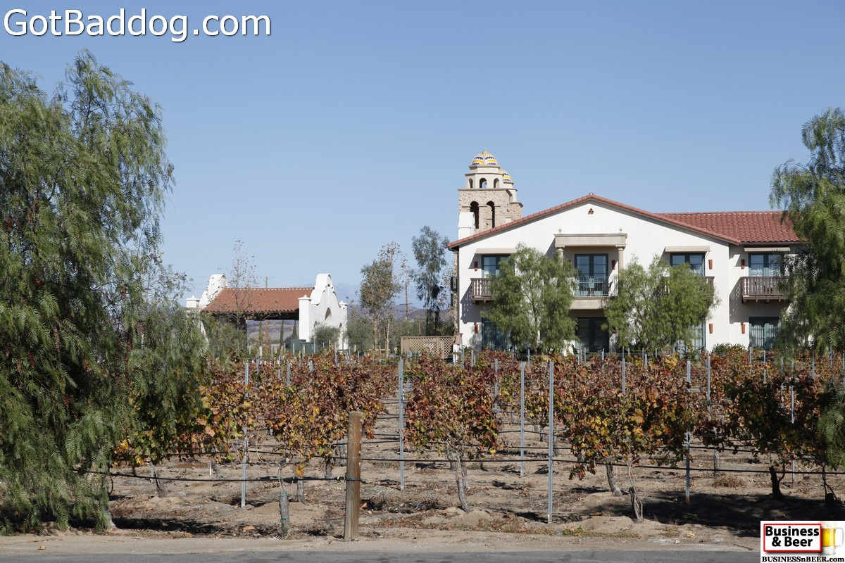 vineyards_3477