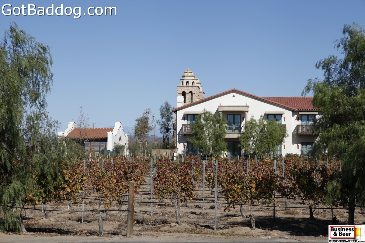 vineyards_3478