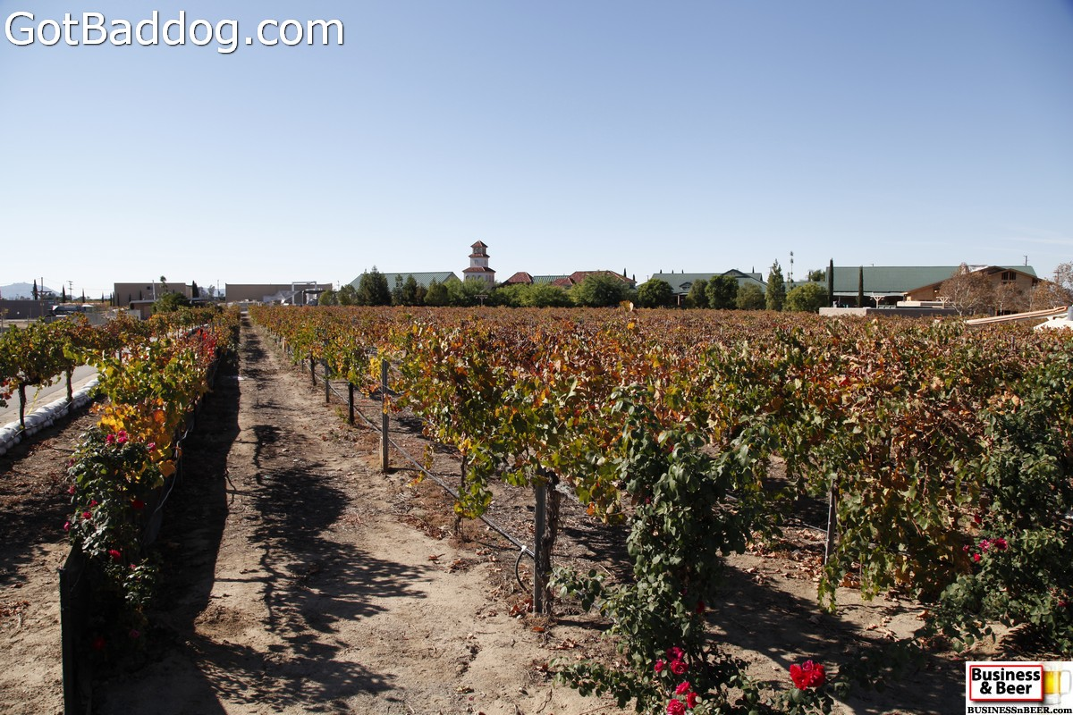 vineyards_3489