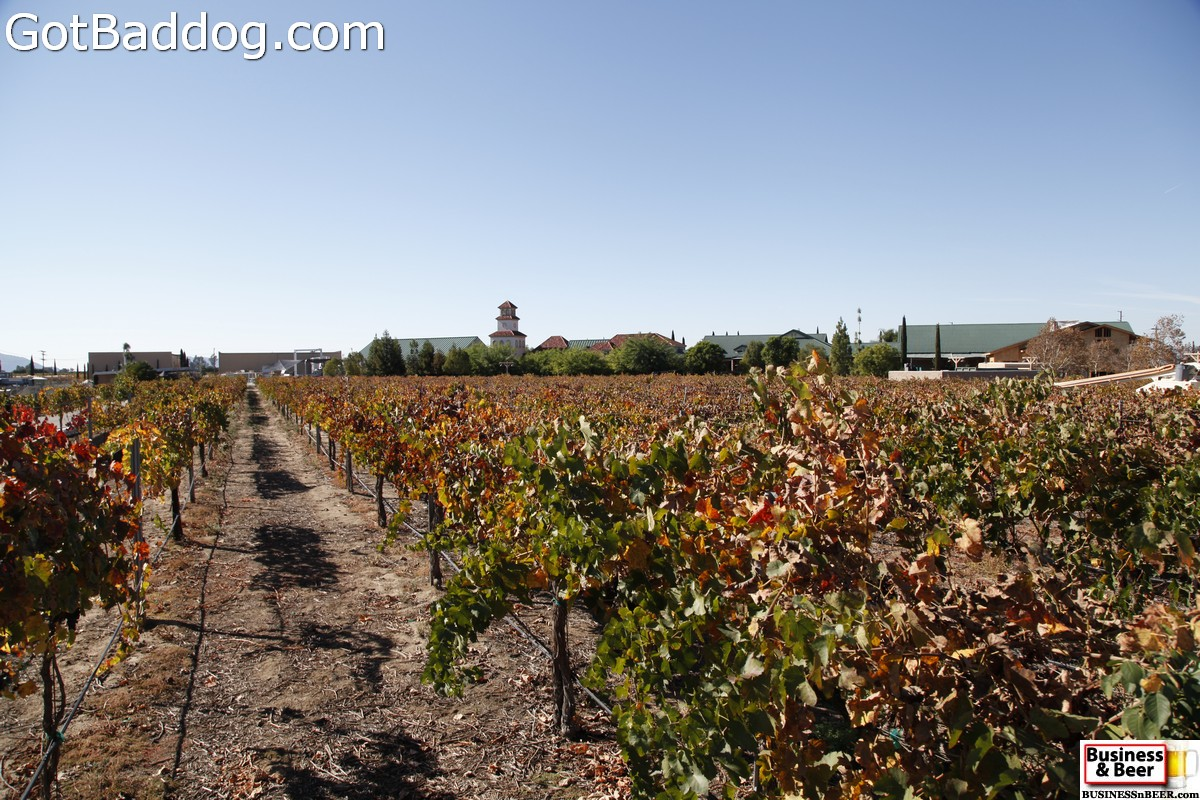 vineyards_3494