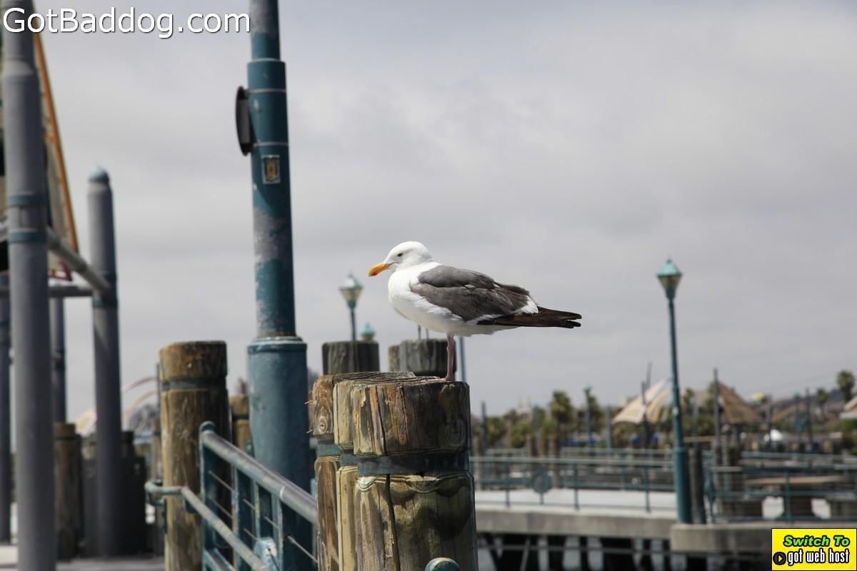 pier-boardwalk_1217