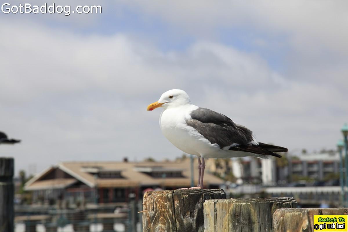 pier-boardwalk_1218