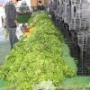 farmersmarket_5789