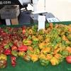 farmersmarket_5802