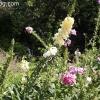 gardensmemorial_0146