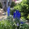 gardensmemorial_0148