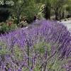 gardensmemorial_0158