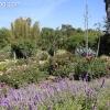 gardensmemorial_0163
