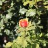 gardensmemorial_0167