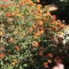 gardensmemorial_0170