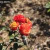gardensmemorial_0174