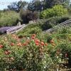 gardensmemorial_0175