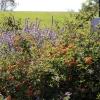 gardensmemorial_0176
