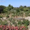 gardensmemorial_0179