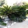 botanicgardens_7676