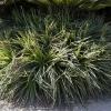 botanicgardens_7682