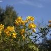 botanicgardens_7684