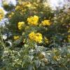 botanicgardens_7685