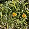botanicgardens_7690