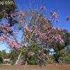 botanicgarden_9505