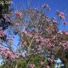botanicgarden_9506