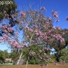 botanicgarden_9507
