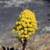 botanicgarden_9508