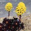 botanicgarden_9509