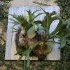 botanicgarden_9510