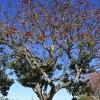botanicgarden_9513