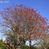 botanicgarden_9515