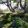 botanicgarden_9520