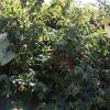 botanicgarden_9524
