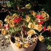 botanicgarden_9526