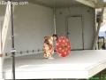 CherryBlossom_9770